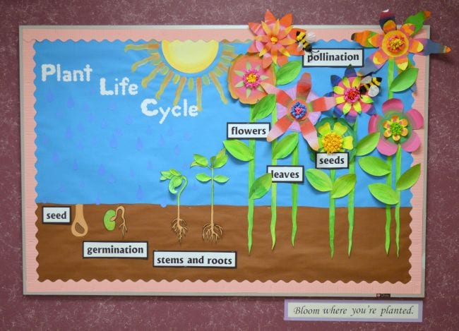3-D bulletin board showing the plant life cycle with paper flowers