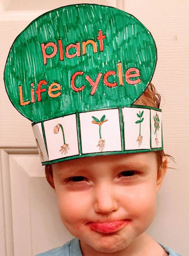 Young student wearing a paper hat showing the plant life cycle