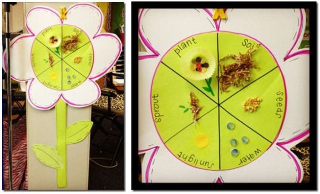 Paper flower with center divided to show the life cycle of a plant