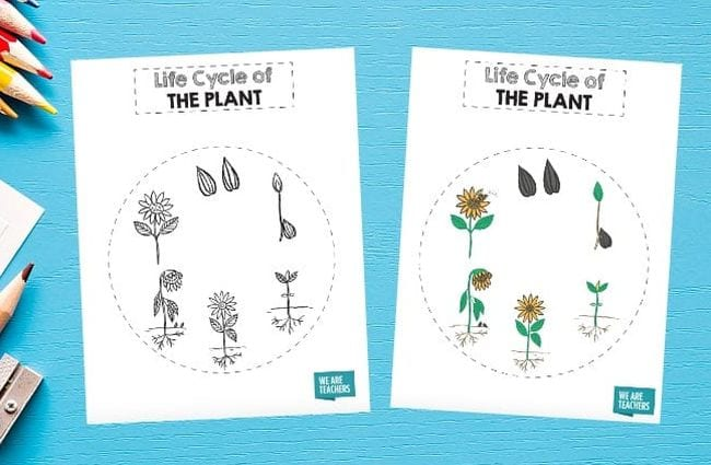 Printable worksheet showing the plant life cycle in a circle