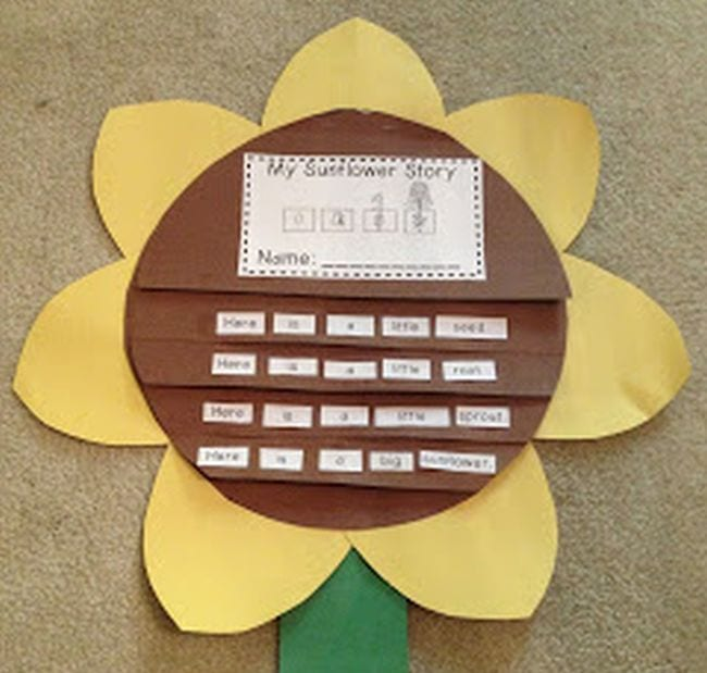 Sunflower flipbook with plant life cycle sentences to sequence