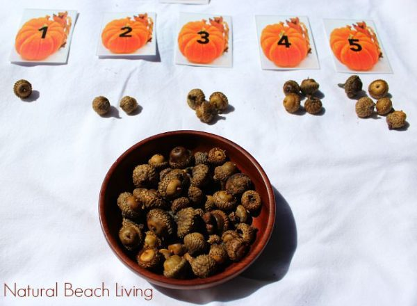 math counting game for young children using pumpkin cards and acorns
