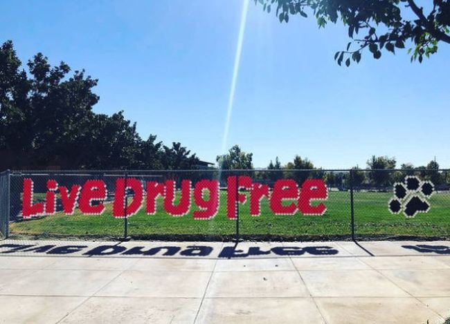 Live Drug Free spelled out on a chain link fence using plastic cups