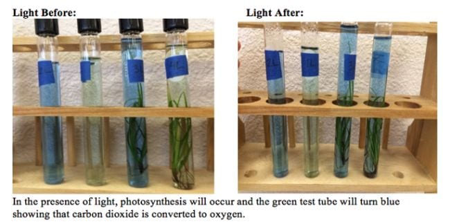 Test tubes filled with plants and green and blue liquid