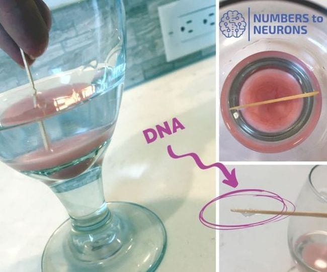 Collage of steps to extract DNA from a strawberry (Science Experiments for High School)