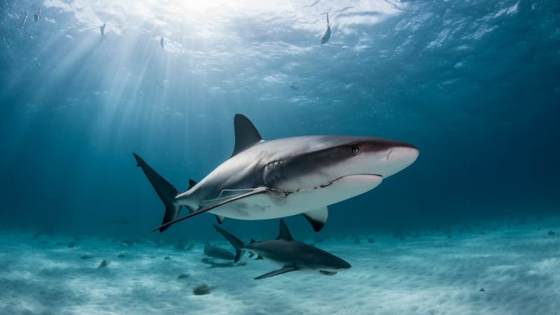 sharks myths