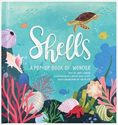 Book cover for Shells: A Pop-Up Book of Wonder as an example of pop-up books for kids