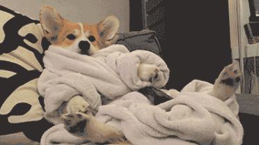Sick day dog meme - teacher secrets