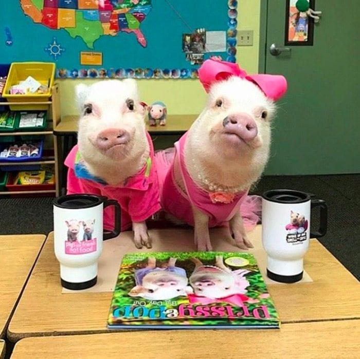 teacher_pig_pets_book