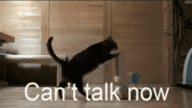 This is the Time Teachers Catch Up on Normal Life cat gif