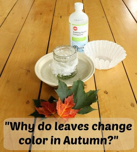 why-do-leaves 6th grade science How We Learn