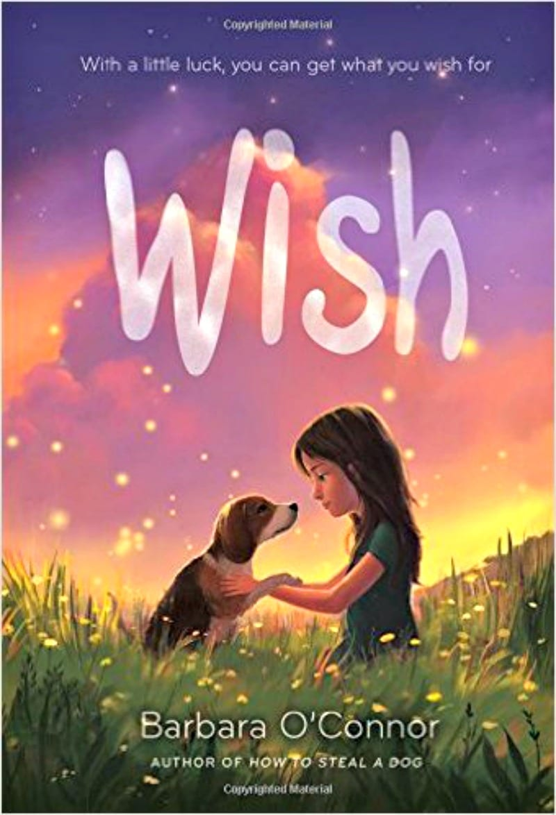 wish800